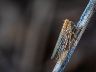 The Cicada's Wing - The Story Behind the Name